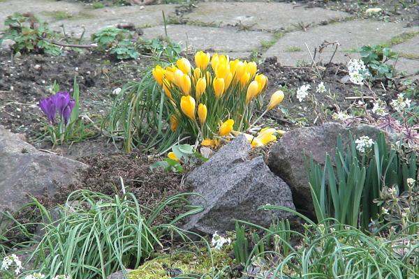 Der Garten Im Februar garten im februar
