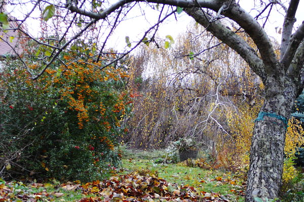 Der Obstgarten im November muss auch auf den Winter vorbereitet werden